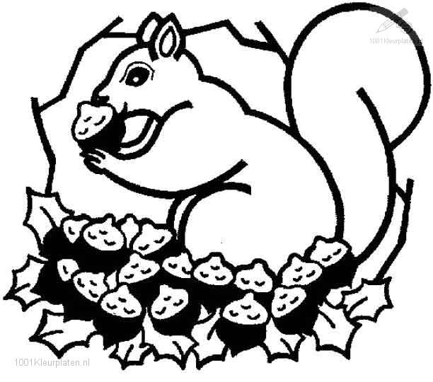 buntute rodo oren sitik tekening eekhoorn kleurplaat
