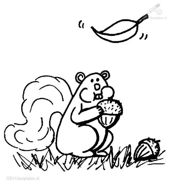 Kleurplaat: kleurplaat-eekhoorn-6