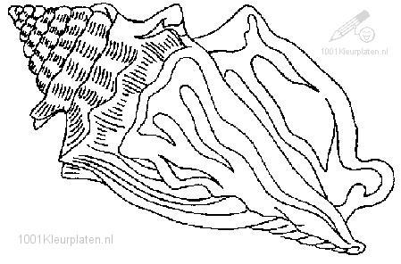Kleurplaat Zee Schelp