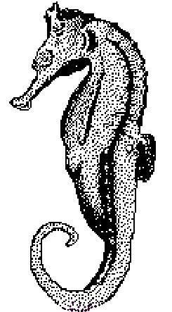 Kleurplaten Van Zeepaardjes.Kleurplaat Dieren Allerlei Kleurplaat Zeepaardje