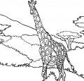 Giraffe Kleurplaat >> Giraffe Kleurplaat