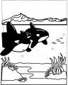 Kleurplaat Haai >> Kleurplaat Haai