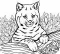 Leeuwen Welpjes >> Kleurplaat Leeuwen Welpjes