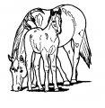 Kleurplaat Paard >> Kleurplaat Paard