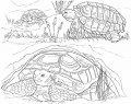 Kleurplaat Schildpad>> Kleurplaat Schildpad