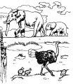 Kleurplaat Struisvogel