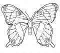 Kleurplaat Vlinder >> Kleurplaat Vlinder