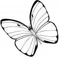 Kleurplaat Vlinder groot
