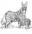 Kleurplaat Zebra >> Kleurplaat Zebra